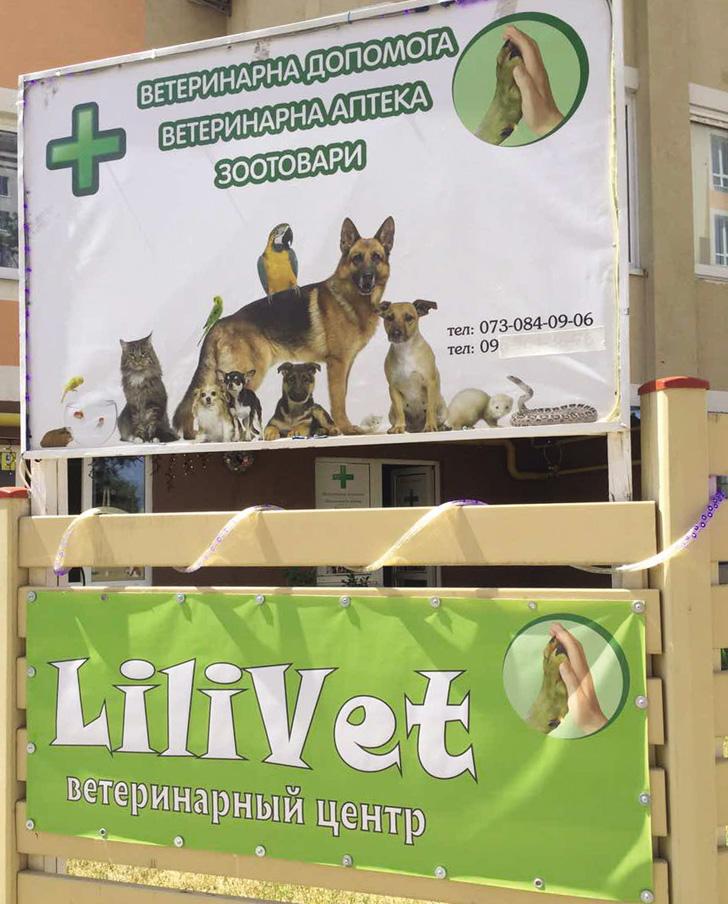"""Ветеринарний центр """"LiliVet"""" – допомагає, лікує та дарує радість"""