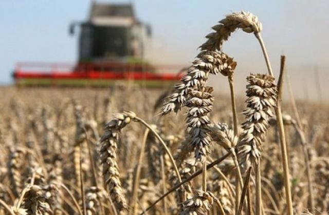 Три держпрограми щодо підтримки сільгоспвиробників не профінансовані