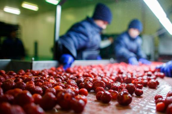 Українська компанія будує у Польщі найбільший у Європі фруктовий завод